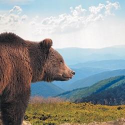 Alaska_Land